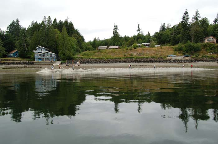 New geoduck farm without Army Corps permit.