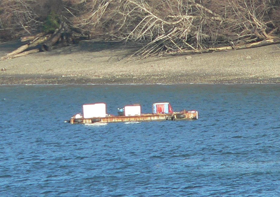 Allen Shellfish barge in Zangle Cove -- since late November 2008.