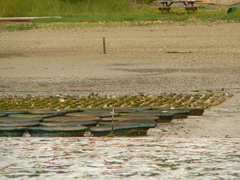 Kiddie pools used for geoduck seed on Taylor Shellfish geoduck farm, Hammersley Inlet