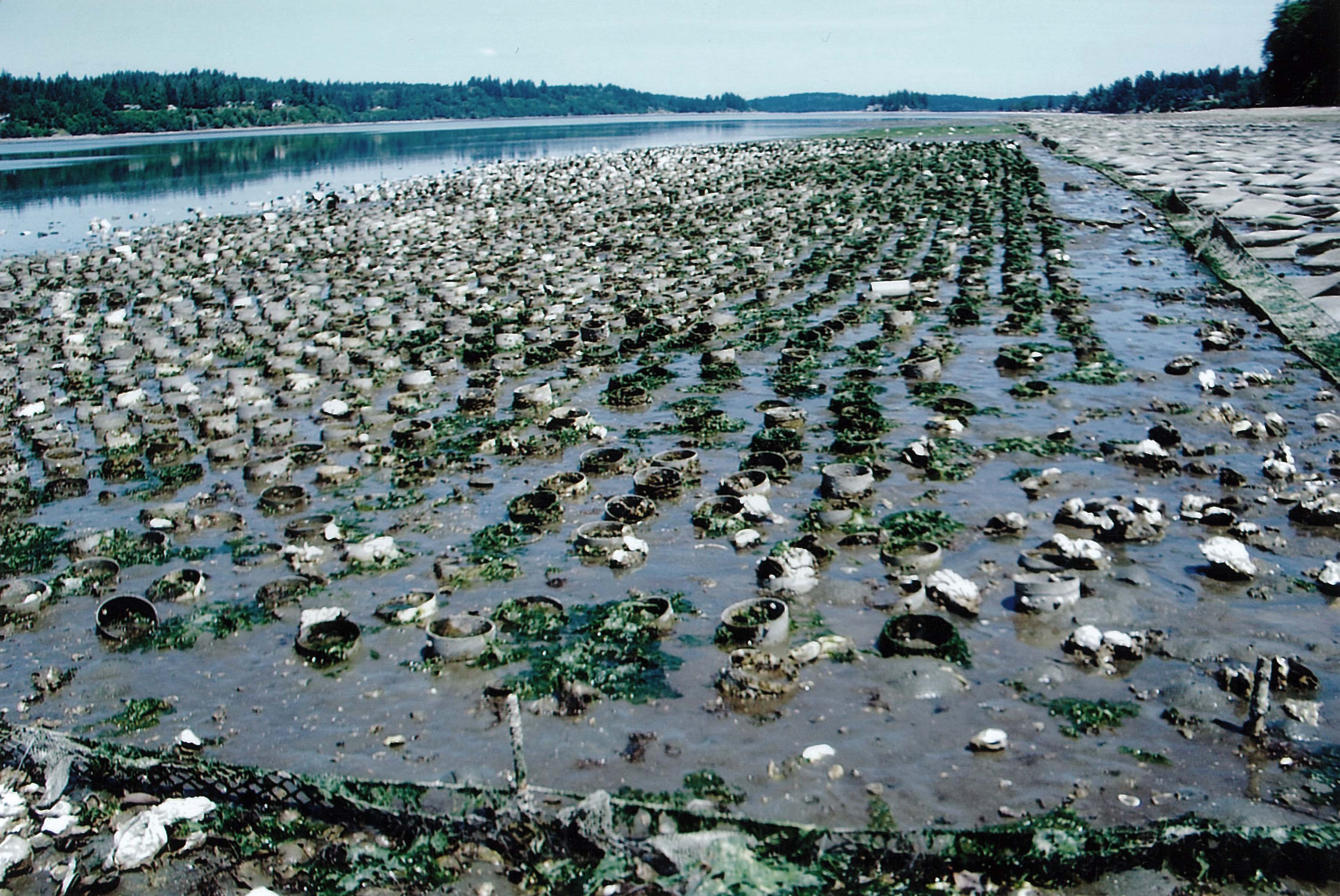 Protect Our Shoreline