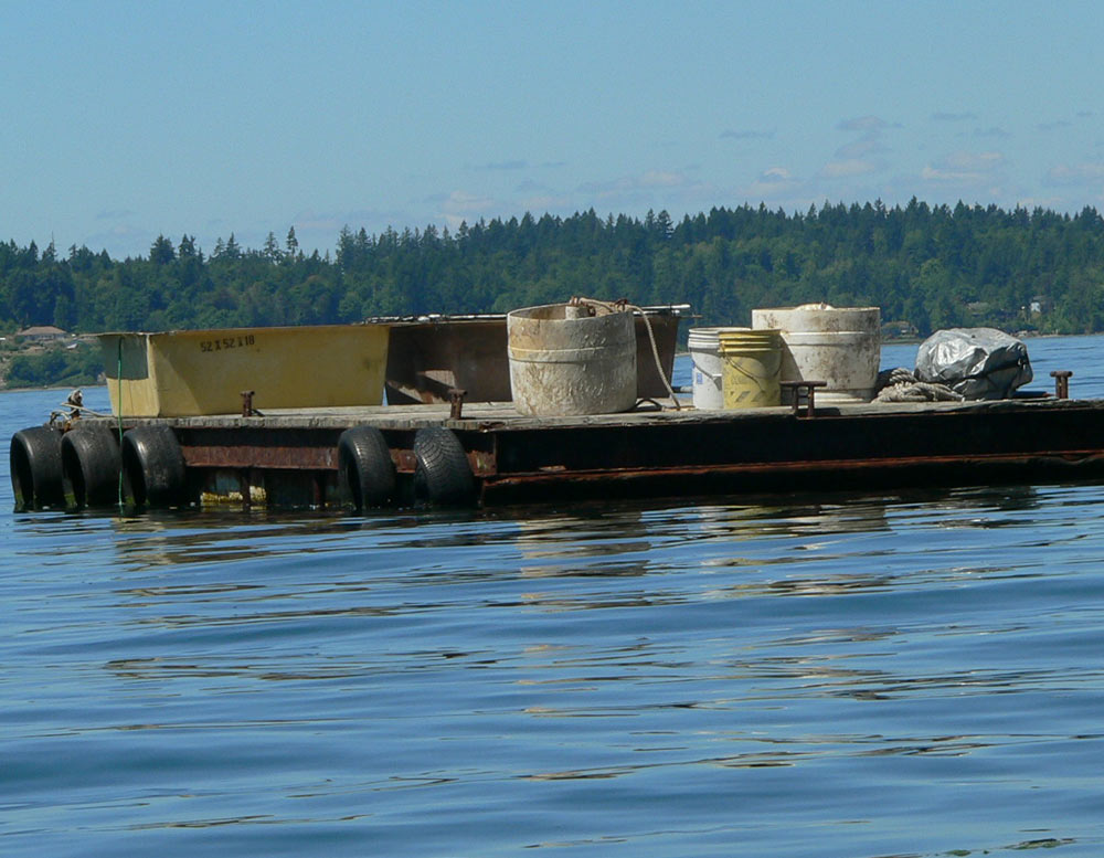 Barge anchored off 3-year old geoduck operation