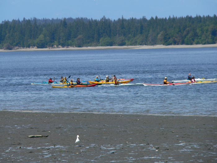 Kayakers in Zangle Cove 2006